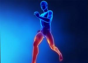 Febra-musculara